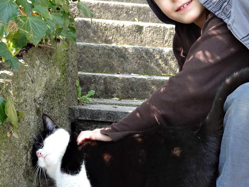 Kurze Katzenpause